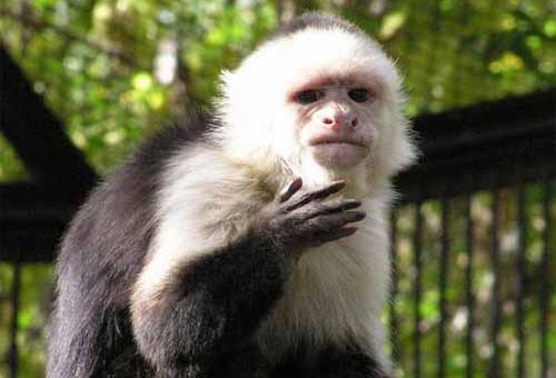 Новосибирский зоопарк Животные