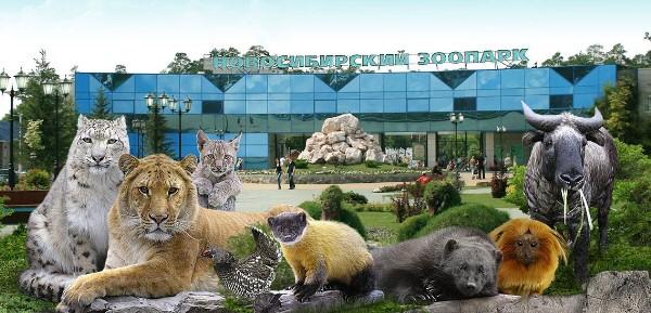 www.zoonovosib.ru Новосибирский зоопарк